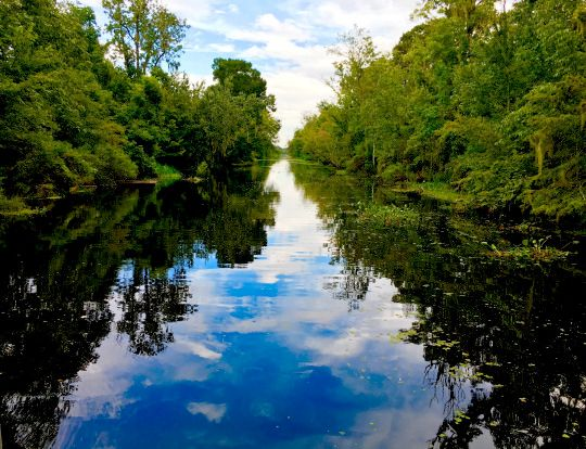 [A view of bayou Manchac from a boat]