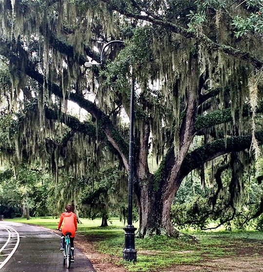 [A cyclist rides past a large, moss-covered oak in Audubon Park]